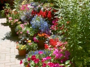 21 Pebble Hill  (Runner Up - Best Tubs/Hanging Baskets)  (Runner Up - Most Colourful Flower Garden)