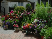 21 Pebble Hill  (Runner Up - Most Colourful Flower Garden)  (Runner Up - Best Tubs & Hanging Baskets)