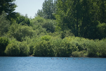 20100603_Thrupp_Lake_IGP2274_450