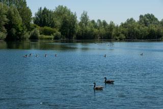20100603_Thrupp_Lake_IGP2276_320