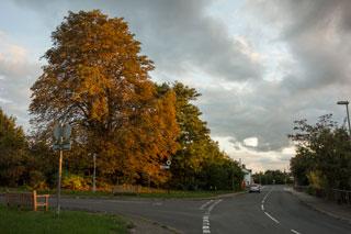 20131005_DSC0497_autumn_chestnut_320