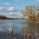 Flooded Meadows, Lower Radley, 16 February 2014.